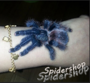 SpiderShop胖胖的爬宠店2店